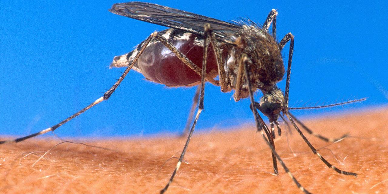 Comment traiter les différents stades du paludisme ?