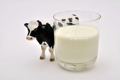 Consommation de lait de vache : les risques pour la santé