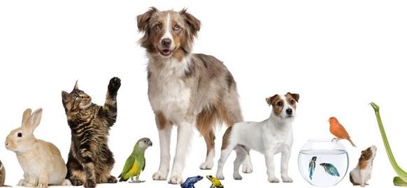 Assurance santé pour animaux de compagnie : quels avantages ?