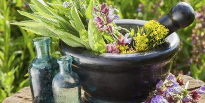 Les conseils des herboristes thérapeutes pour combattre les différentes infections
